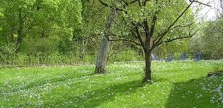 chambre d hotes foret allemagne maison d hôtes bettina badenweiler forêt allemagne