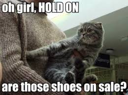 Cat Pic Meme - black friday cat memes so accurate it hurts meowingtons