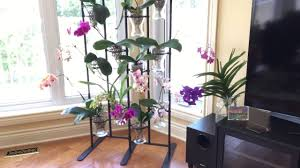 new ikea orchid stand youtube