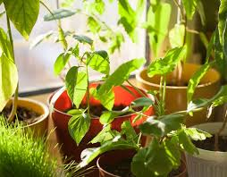 indoor plants singapore home tips the best indoor plants for the singapore home home