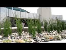 amazing arizona landscaping ideas arizona landscaping ideas