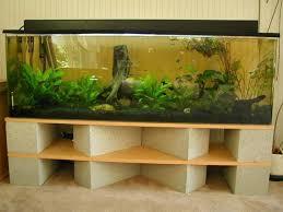 best 25 fish tank decor ideas on plant fish tank
