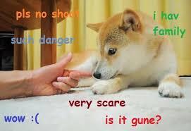 Funniest Doge Meme - funny doge meme image quotesbae
