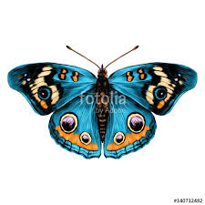 butterfly with open wings top view of symmetry sketch the graph