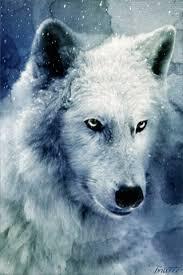 imagenes sorprendentes de lobos gif lobo bajo la nieve animales pinterest la nieve nieve y bajos