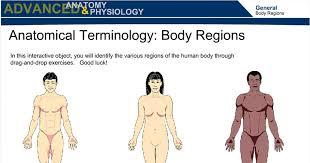 anatomical terminology body regions wisc online oer