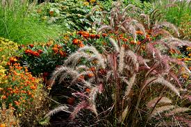 best 25 california native landscape 12 best ornamental grasses for landscaping