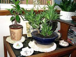 decor plants home plants home decor saramonikaphotoblog