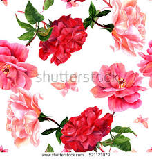 Roses And Butterflies - butterfly on stock images royalty free images vectors