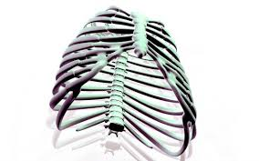 learn about rib cage anatomy from spinal expert key