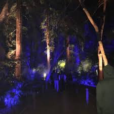 enchanted forest of light tickets enchanted forest of light at descanso gardens temp closed 1180