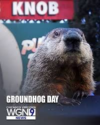 Groundhog Meme - wgn tv happy groundhog day chicago and yes both facebook