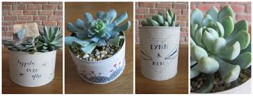 succulents fionatreadwell