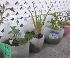 my mini kitchen garden 6 steps