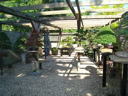 152 best bonsai working area images on pinterest bonsai pine