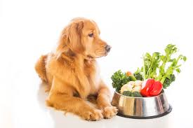 diet and nutrition u2014 canine cancer