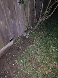 rabbit nest in yard best yard design ideas 2017