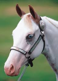 color patterns in paint horses expert advice on horse care and
