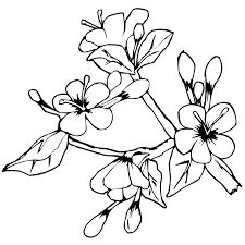 easter flowers coloring pages getcoloringpages com