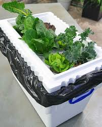 Hydroponics Vegetable Gardening by How To Build A Hydroponic Garden Martha Stewart