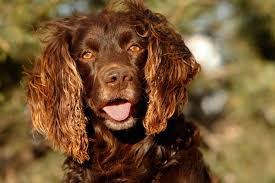 Do Brittany Spaniels Shed by Best Hunting Dogs Gun Dogs Hunting Dog Breeds Field U0026 Stream
