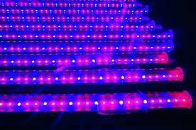 t5 grow light bulbs grow light bulbs lowes grow l lowes cozy fluorescent grow light