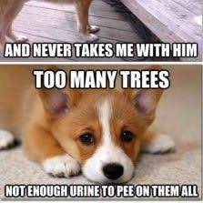 Sad Dog Meme - 66 best dogs images on pinterest adorable animals funny animals
