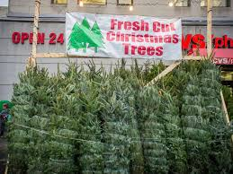 real christmas trees for sale christmas tree shortage may drive up the price of your tree this