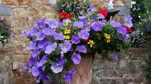 guernsey united kingdom flowers in the garden youtube