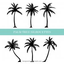 palm vectors photos and psd files free