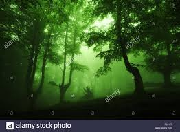 Deep Forest Green Dark Deep Forest With Green Fog Stock Photo Royalty Free Image