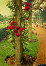 rose trellis greg olsen
