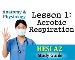 hesi anatomy and physiology lesson 1 aerobic respiration youtube