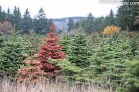 december farming in focus trees it s momsense