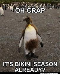 Cute Penguin Meme - penguin meme dump album on imgur