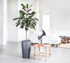 indoor tall plants aloin info aloin info
