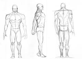 male figure turn arounds by igm transformer on deviantart
