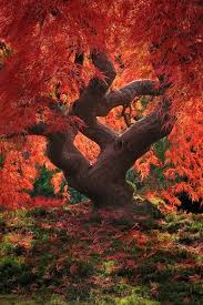 best 25 fall trees ideas on fall trees photography