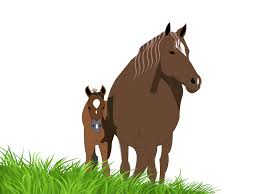 foals and horses presentations ppt backgrounds animals brown