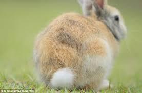 rabbit u0027s tail save bright white tufts