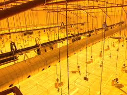 5 common mistakes to avoid when building a cultivation facility