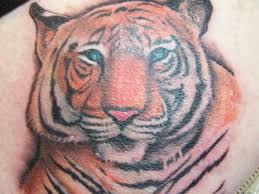 25 stunning tiger designs slodive