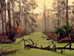 Louisiana landscapes images Louisiana scenery wallpaper wallpapersafari jpg
