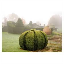 Yew Topiary - 525 best topiary and hedges images on pinterest formal gardens
