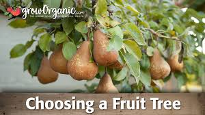 fruit trees a selection guide organic gardening blog