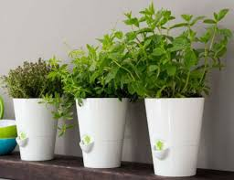 smart planter designed for kitchen herbs gadget flow