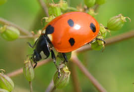 Pictures Of Tiny Red Bugs by Porchside Gardening For Food And Fun Phipps Experts Offer