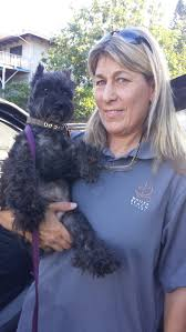 affenpinscher hawaii fundraiser by krista hudson krista kj needs help w cancer ft