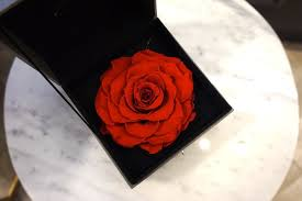 Roses In A Box Te Amo Floristeria Will Make You Fall In Love With Flowers More