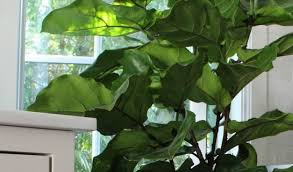 tropical house plants names flowering tropical house plants